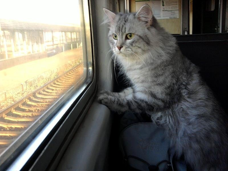 Я еду в поезде прикольные картинки