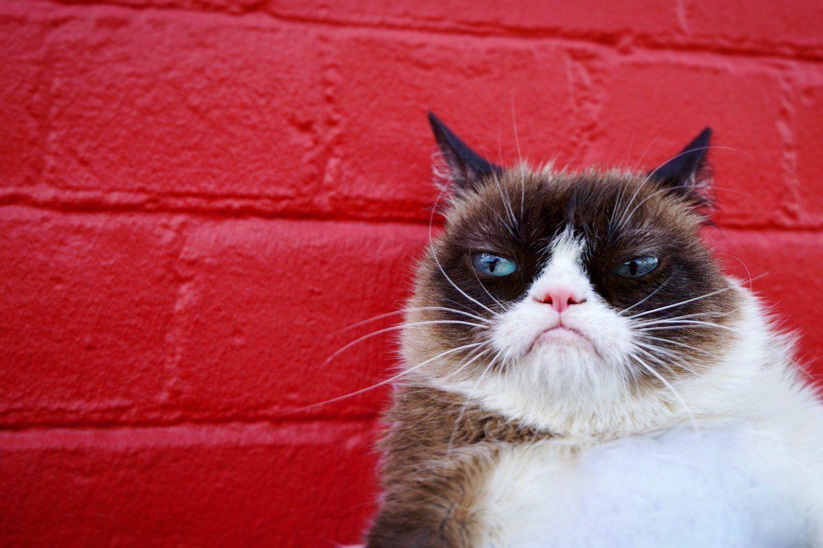 Картинка кот тард