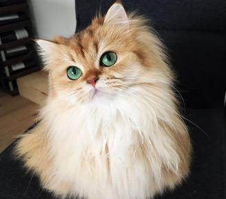 Изящная кошка Смузи