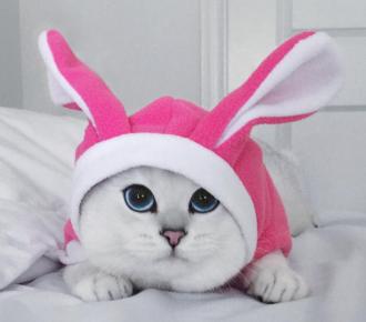Кошка Коби (Coby)