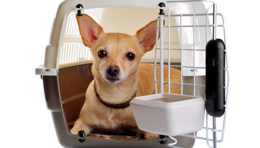 Собака в контейнере