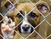 Помощь приюту для животных