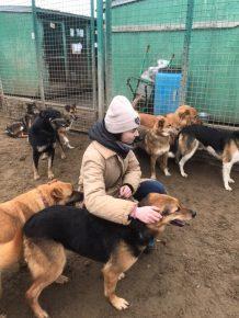 Волонтёр в приюте для животных