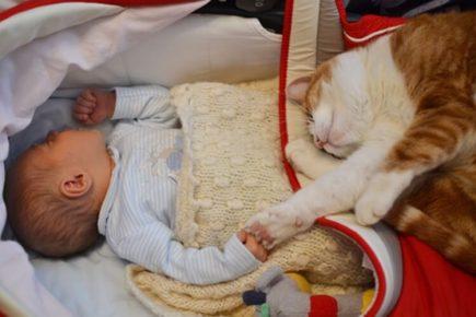 Спящие младенец и кот
