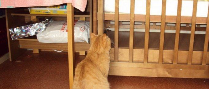 Кот у детской кроватки