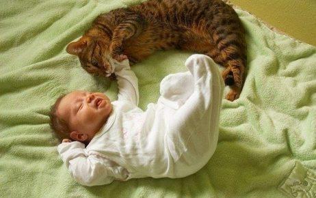 Кот с младенцем