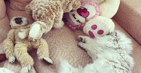 Лакки спит с игрушками