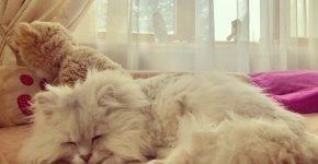 Кот Лакки спит