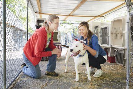 Волонтёры с собакой в приюте для животных