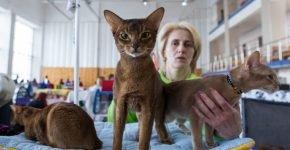 Коты на выставке