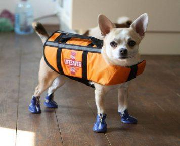 Собака в спасательном жилете