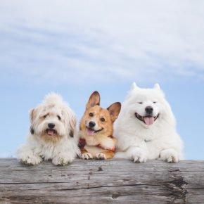 Локи, Медвежонок и Моно