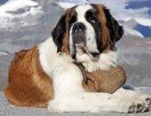 Самые крупные собаки в мире
