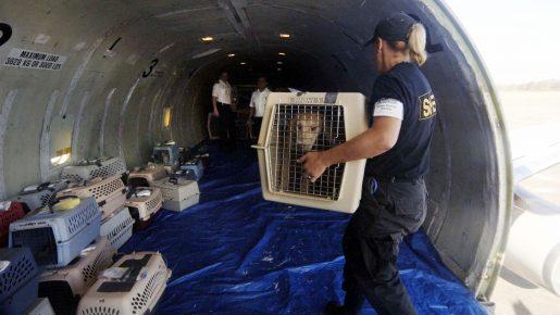 Животные в багажном отделении