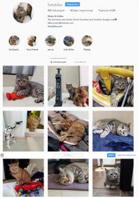 Страница котов в Инстаграм
