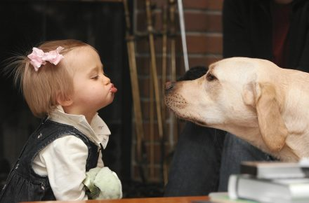 Ребёнок дразнит собаку