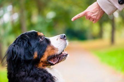 Собака слушает хозяина
