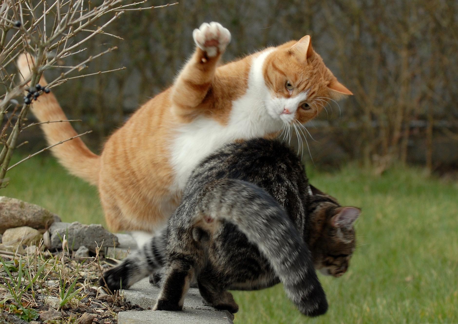 этого можно ли фотографировать кошек приметы помощью живых