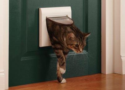 Кошачий лаз в двери