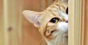 Кошка ждёт хозяина