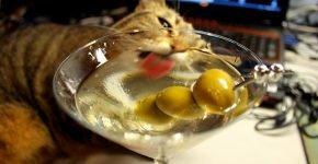 Кошка и оливки в бокале