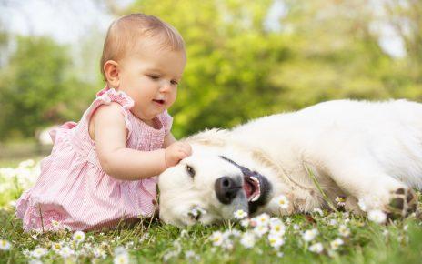 Лабрадор с ребёнком