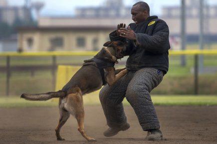 Обучение немецкой собаки