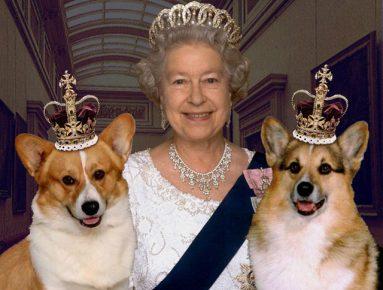 Королева Елизавета II с любимыми собачками