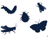 Тени насекомых