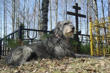 собака на кладбище