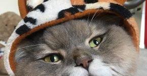 Кот Бон-Бон в шляпке