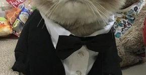Фрак для кота Бон-Бон