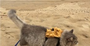 Кот Бон-Бон на пляже