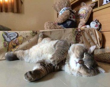 Кот Бон-Бон спит