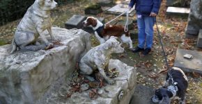 собаки на кладбище