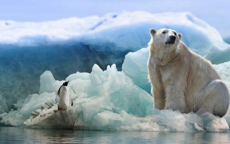 Пингвин и белый медведь