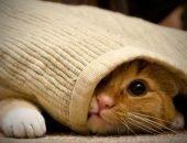 Кот один дома