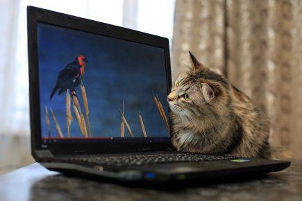 Кошка смотрит в ноутбук