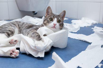 Кот рвёт туалетную бумагу