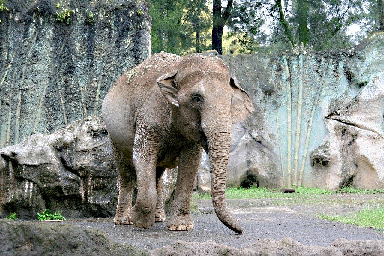 Картинки слона в зоопарке для детей