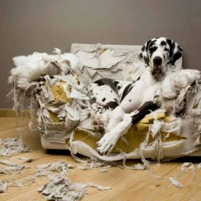 Собака погрызла диван
