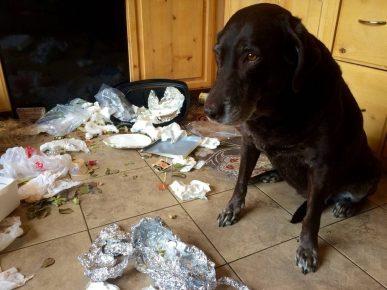 Собака и мусор