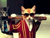 Крутые коты