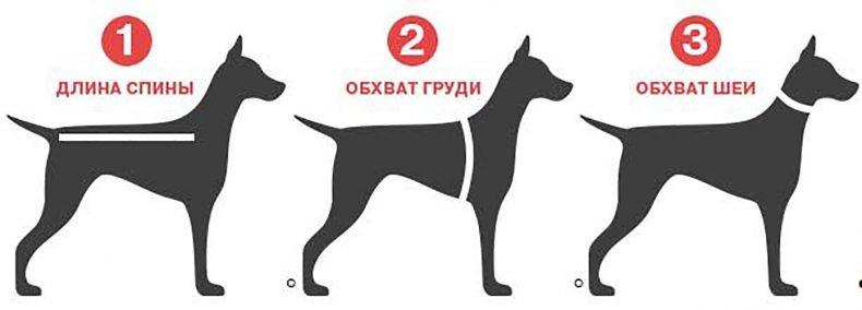 Мерки, необходимые для выбора одежды для собак