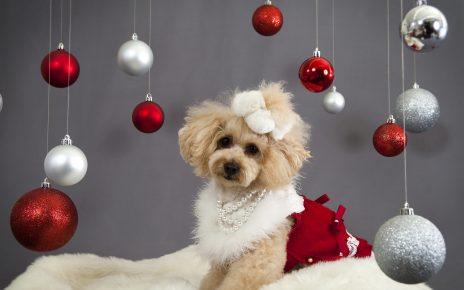 Собака и новогодние шары