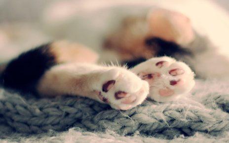 Задние лапки кота