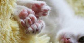 Лапки котёнка