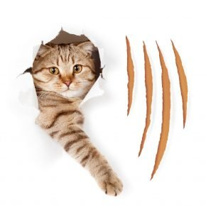 Кот и царапины