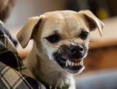 Собака злится
