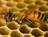 Пчёлы в сотах